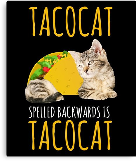 Taco Cat Funny Cat Pun Kitty Cat Lover by modernmerch