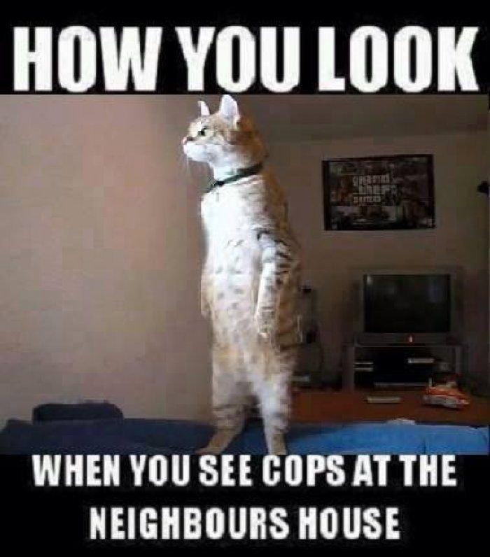 How you look cat meme Funny Dirty Adult Jokes Memes Cartoons Ecards Fails &