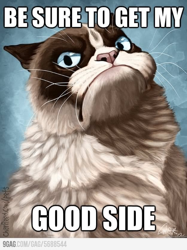 Be Sure To Get My Good Side Funny Grumpy Cat Meme Picture