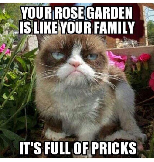 Grumpy Cat meme GrumpyCat