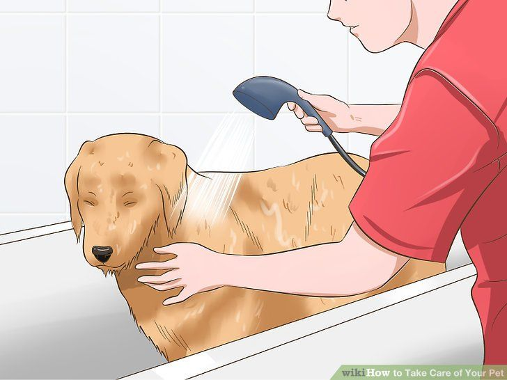 Image titled Take Care of Your Pet Step 9