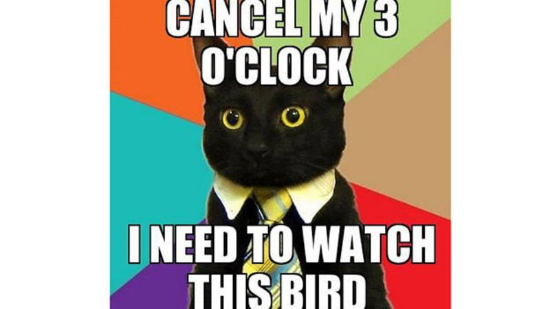 Gather the Fascinating Funny Cat Memes Clock