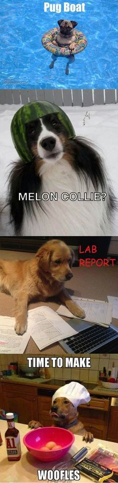 14 Dog Puns That Are So Corny They ll Give You A Serious Case The Giggles