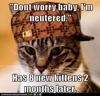kitten liars lies Memes neutered pregnant Scumbag Cat scumbags