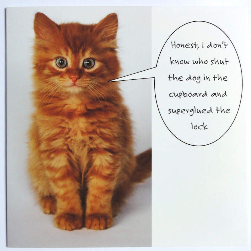 Who Shut The Dog In The Cupboard Funny Cat Card