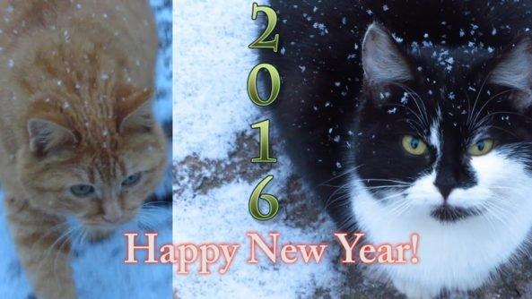 New Year 14 Astonishing Happy New Year Cat Happy New Year Catholic Blessing Cat Stamphappy Memeshappy