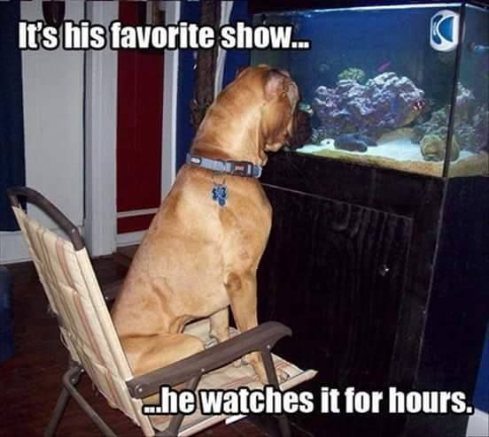 Funny Dogs Funny Memes For Kids Great Dane Funny Cute Dogs Funny