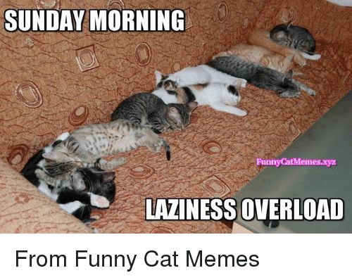 Lazy Memes and Sunday SUNDAY MORNING Funny CatMemes LAZINESS OVERLOAD From