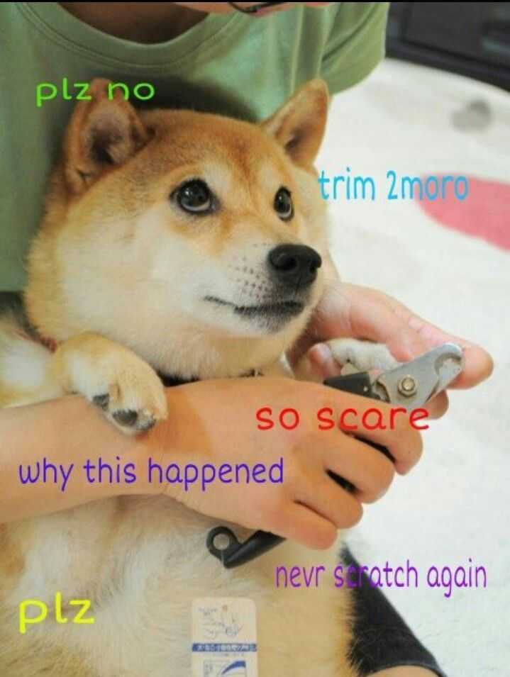 Doge OMG Abram Goglanian Medley BObby was telling me about this for soo long yesterday