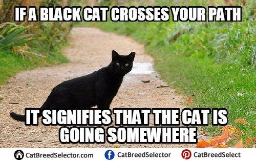Funny Black Cat Memes