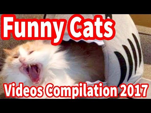 Gather the Incredible Cat Memes Funny 2017