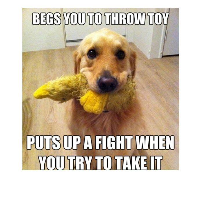 45 Funny Dog Memes