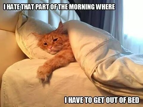 Cat meme about ting out of bed in the morning
