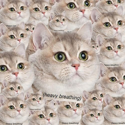 fat cat memes heavy breathing Google Search Fat Cat Meme Funny Cat Memes
