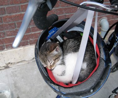 Cat Sleeping In Bike Helmet