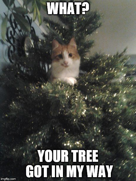 What Your Tree Got In My Way