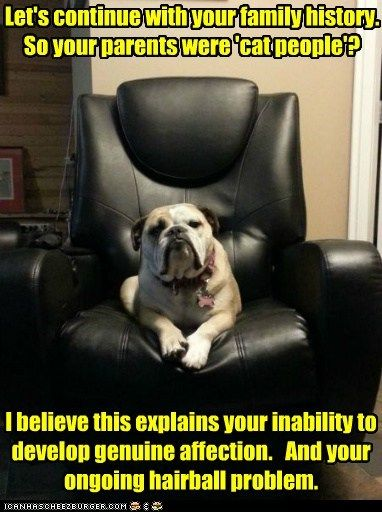 chair dogs cat people therapy bulldog therapy dog psychoanalyst
