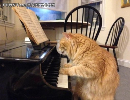 Funny cat on the piano