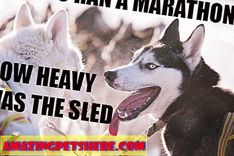 Tu je 45 vtipn½ch psch mémov ktoré sa zaoberajº vÅ¡etk½m od deÅ¡truktvneho správania až po podanie s ej právnej rady