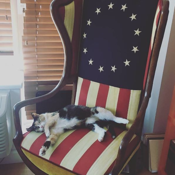 It s my most patriotic napping spot