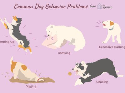 How to Solve 10 of the Biggest Dog Behavior Problems
