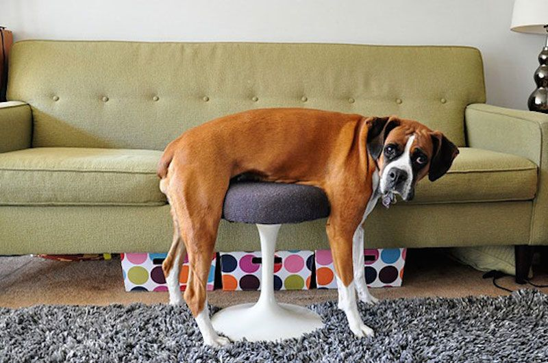 funny cats dogs stuck furniture 1