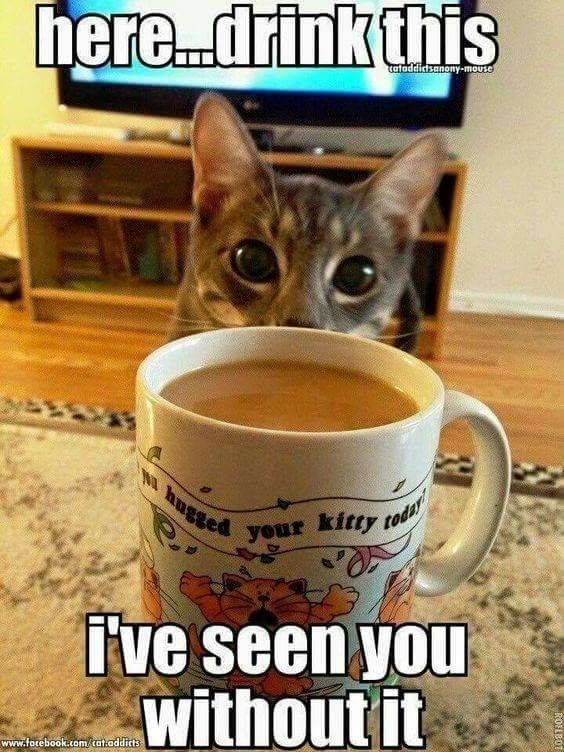 15 Cats Hyped Up Coffee Memes To Get Your Through This Day Cat Ideas Pinterest