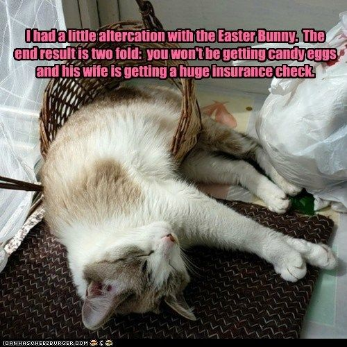 bunnies bunny cat damage easter Easter Bunny fight holiday hospital insurance cat oops violent