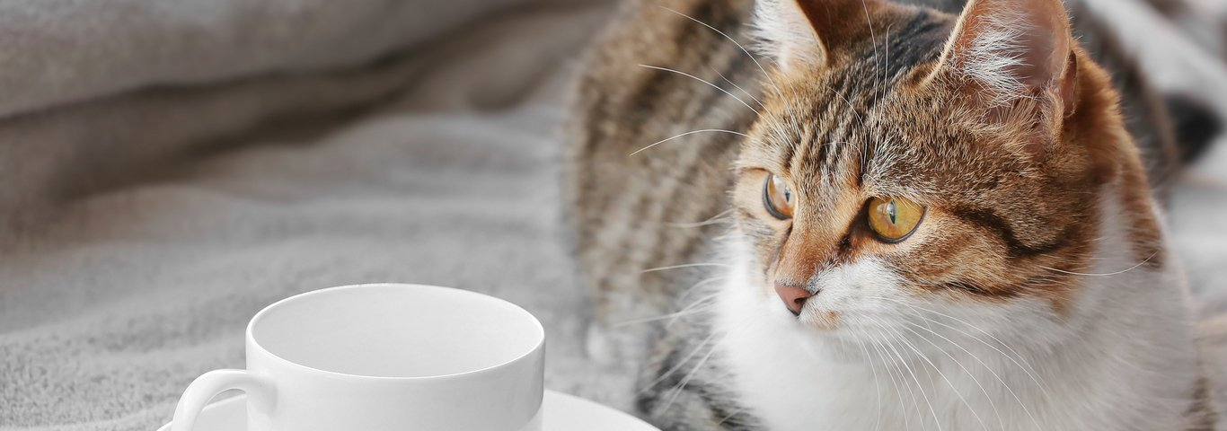 Coffee and Cats Cat Cafés are the New Trend