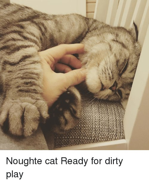 Cats Funny and Dirty Noughte cat Ready for dirty play