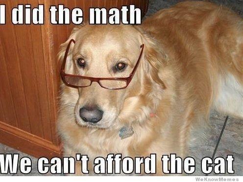 dog meme Funny Dog Memes Cat Memes Funny Dogs Dog Funnies Dog
