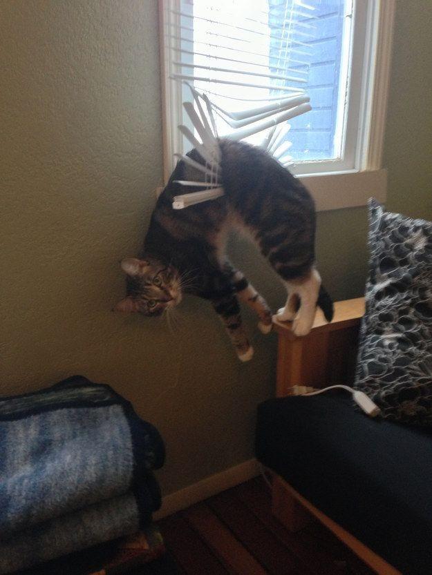 Cat Stuck in Blinds