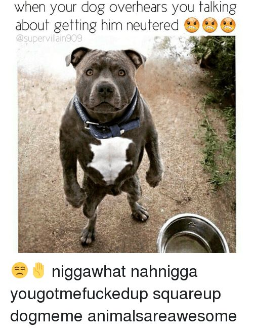 Dogs Dank Memes and Dog when your dog overhears you talking about ting