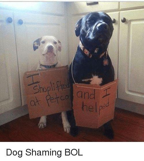 Memes 🤖 and Dog Shopli at helpd Dog Shaming BOL