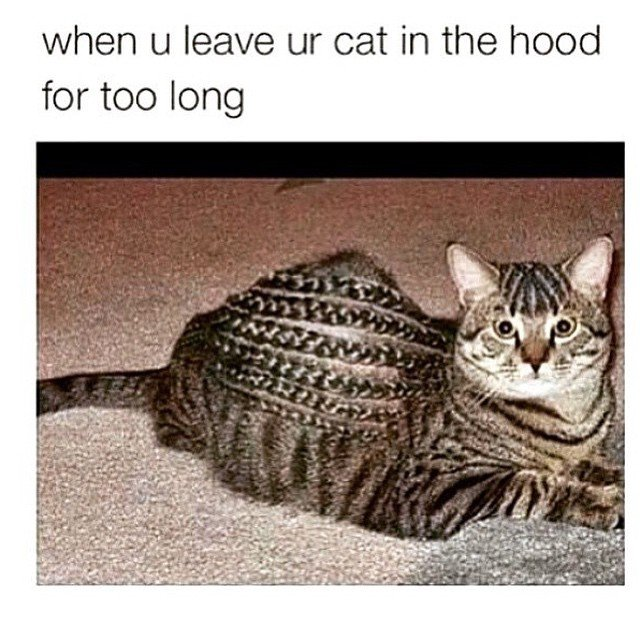 ment a thug cat name