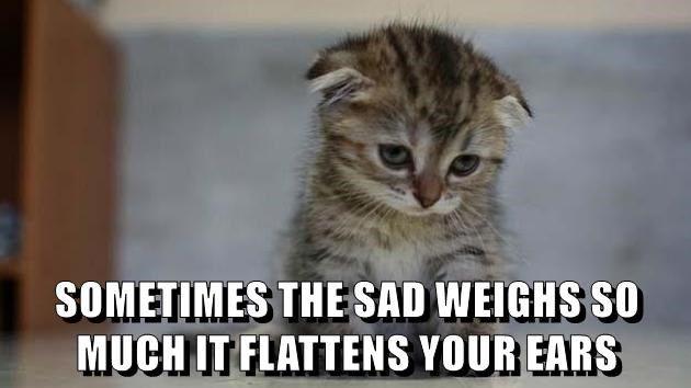animals Sad ears kitten cute caption Cats