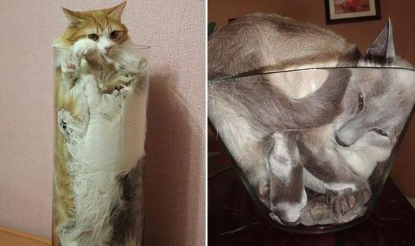 Adorable pictures show cats ting into improbably tight spots