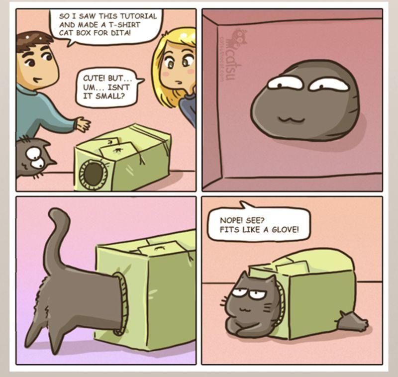 Cute Cat ics – 33 Pics