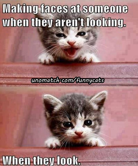 Funny cat sayings with meow 553 x 667