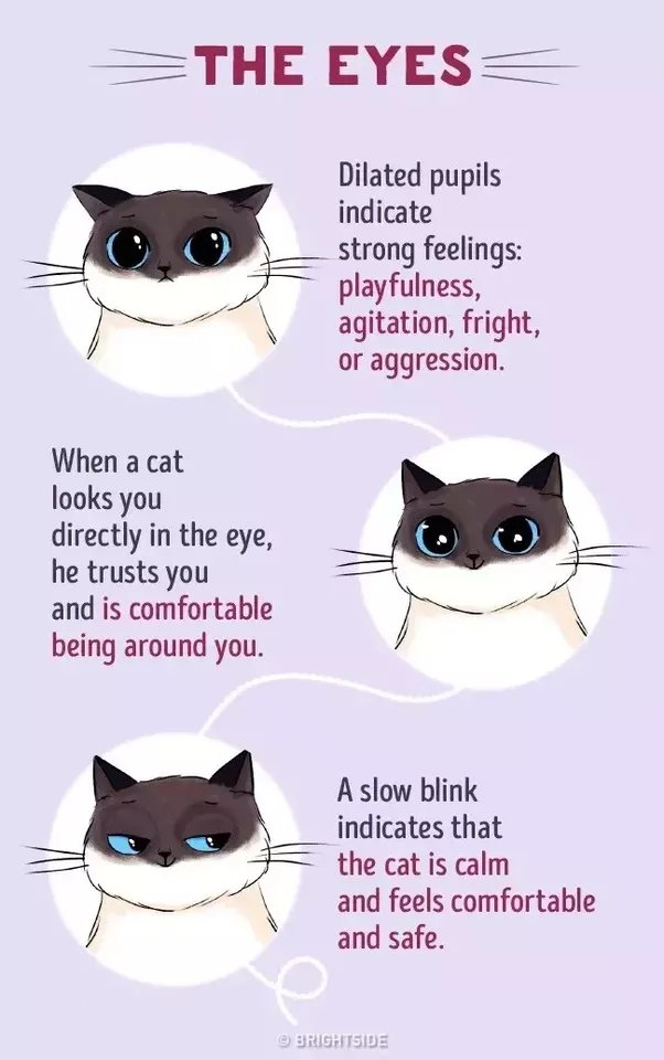 Checkout this prehsive Cat munication Guide from Brightside via