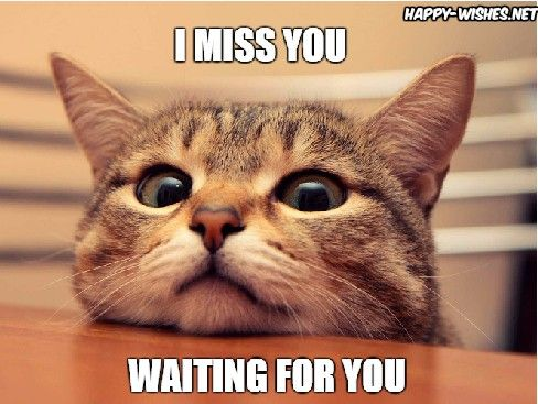 I Miss You Waiting For You Cat Memes