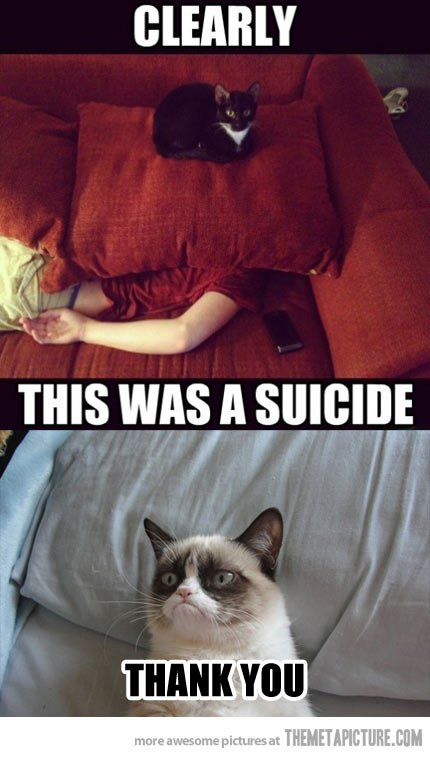 Plotting Cats…