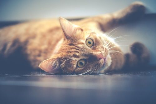 Download the Beautiful orange Cat Pictures Funny - Hilarious Pets
