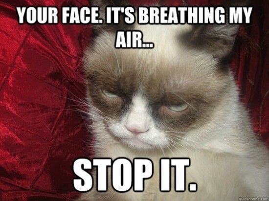 Top 10 Funniest Summer Grumpy Cat Memes