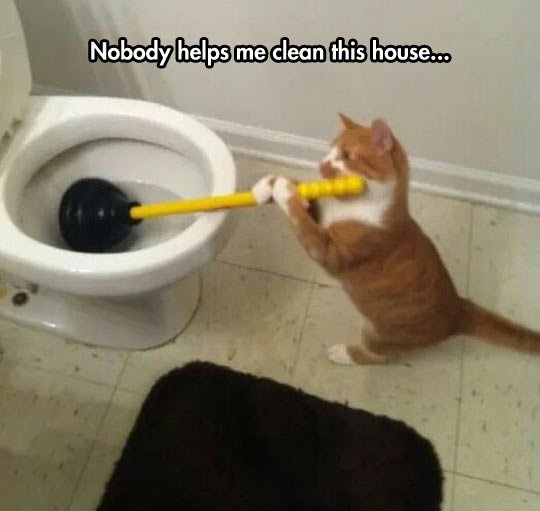 Cat Taking Care The House Maintenance