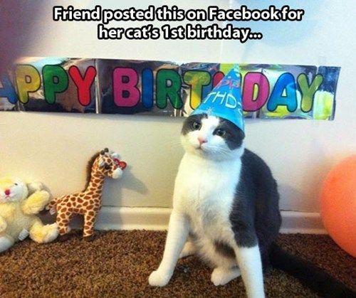 cat with happy birthday hat and banner sign