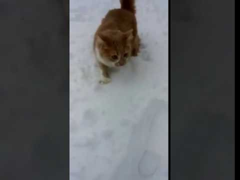 DOG DUNKS CAT IN SNOW D
