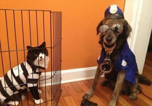 Dog cat funny idea Halloween Cop prisoner 18