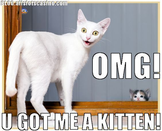 Funny Animal cat memes Just like cat funniest animals cat fun cat funny cat cats cat cute cat stuff catsandkittenstips Cat graphy