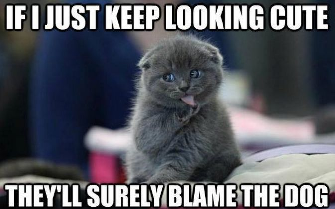 These 15 funny cute cat quotes with pictures